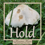 Hold, mushroom in grass